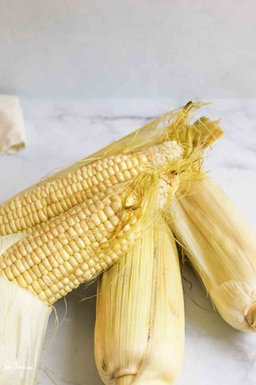 A white plate with steamed corn on the cob stacked on it